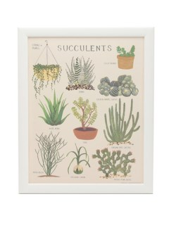 USAGI Gallery/Succulents Print/カルチャー
